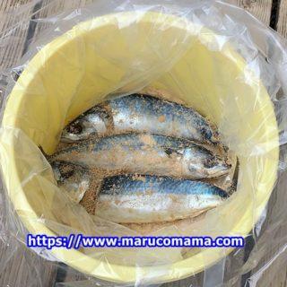 発酵食品福井県の伝統料理へしこを滋賀県高島バージョンで作る